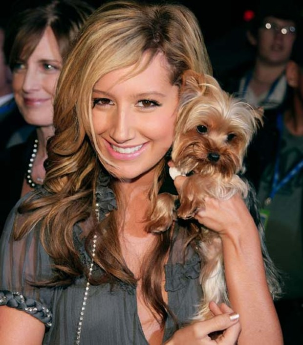 ashley-tisdale-hund-dog
